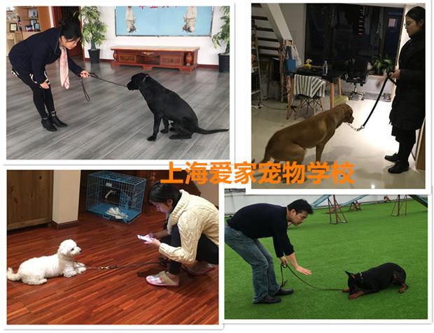 家长学习训练狗狗.jpg