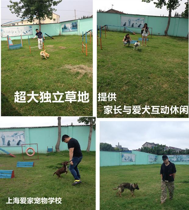 家长与狗狗互动.jpg