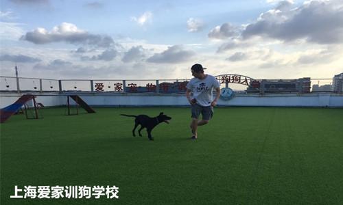 上海爱家宠物学校狗运动_副本.jpg